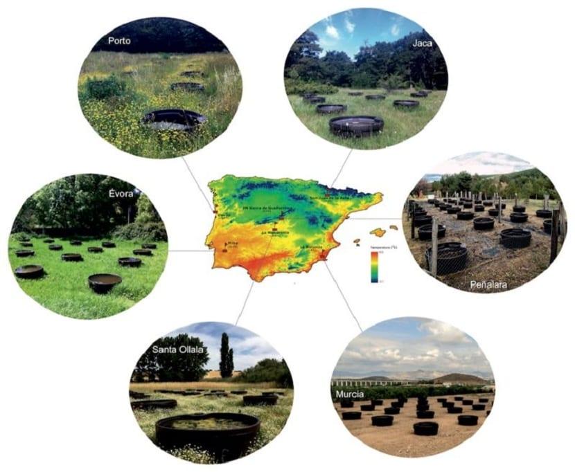 Iberian Ponds