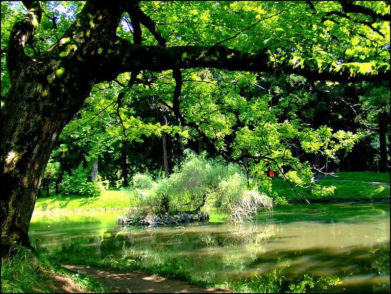 Si tienes oportunidad, planta un árbol para mejorar la calidad del aire