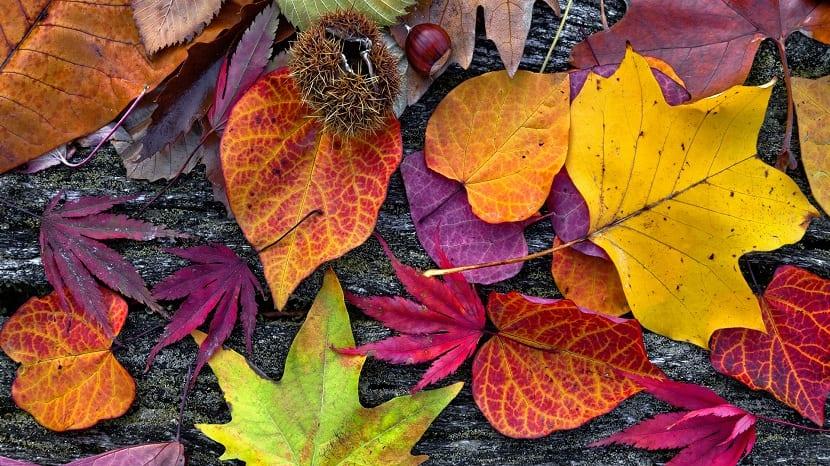 Llegada del otoño