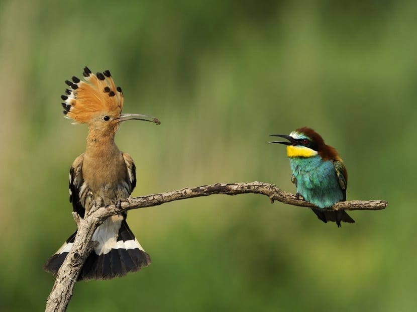 Fenología en las aves