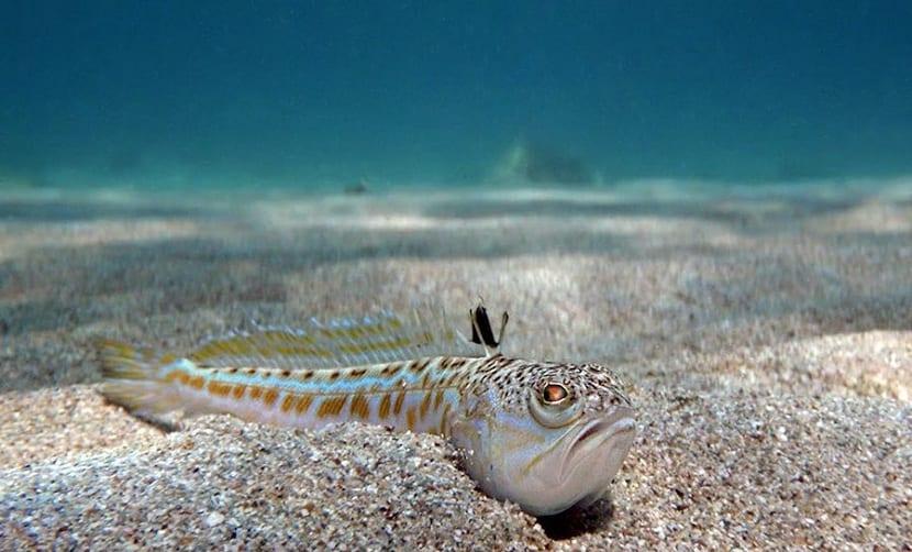 amenazas mar Egeo