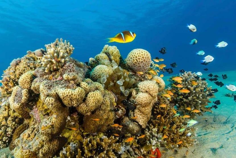 biodiversidad mar Egeo