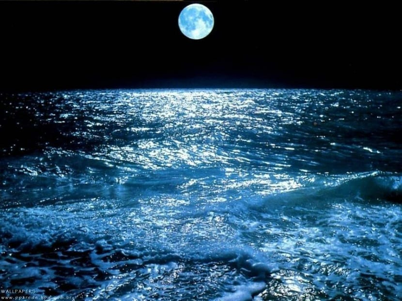Mareas vivas