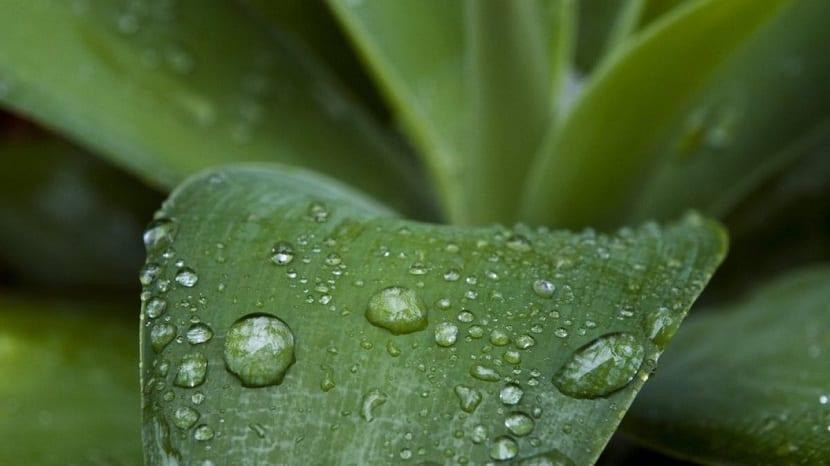 El petricor de la lluvia