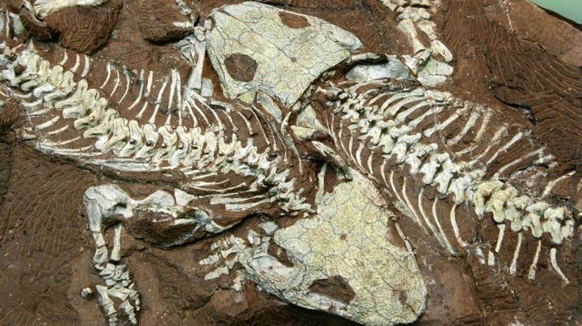Estudio de fósiles