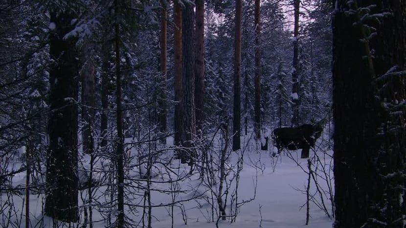 Fauna de los Urales