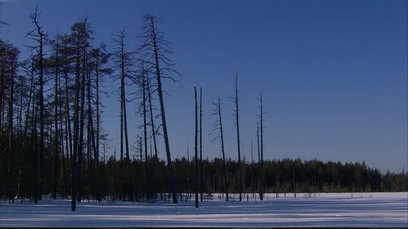 Zona polar de los Urales