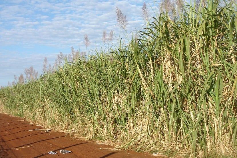 Material para biocarburantes