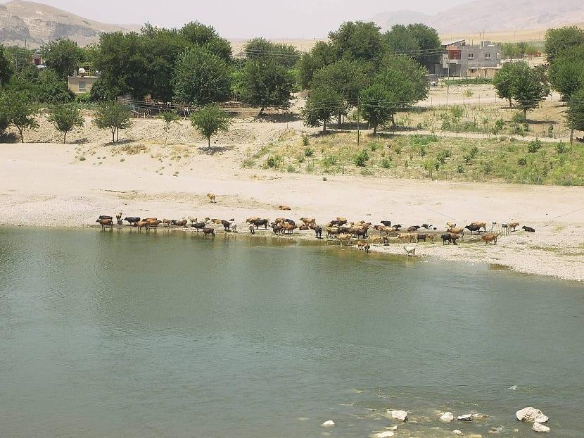Fauna del río Tigris