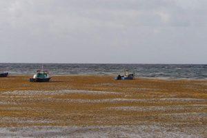 Mar de los Sargazos