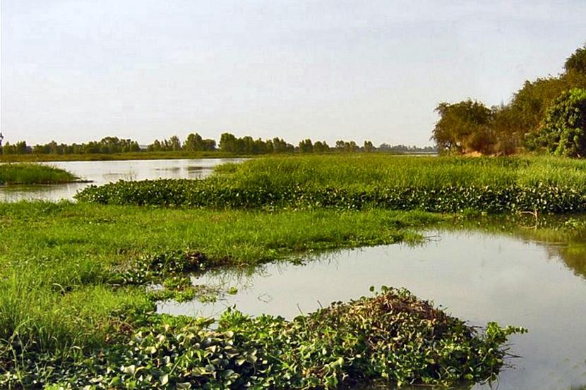 Vegetación del rio Níger