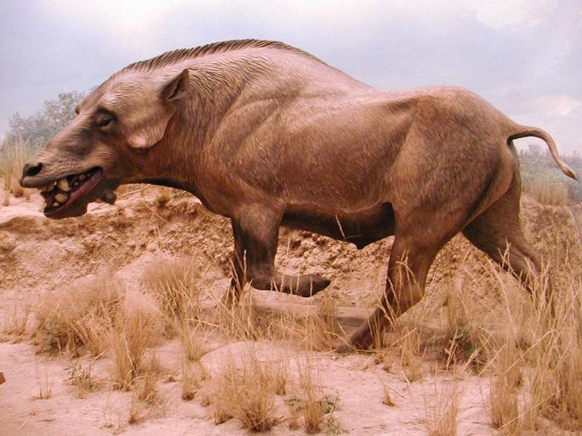 Animales del oligoceno