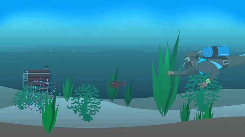 Morfología marina