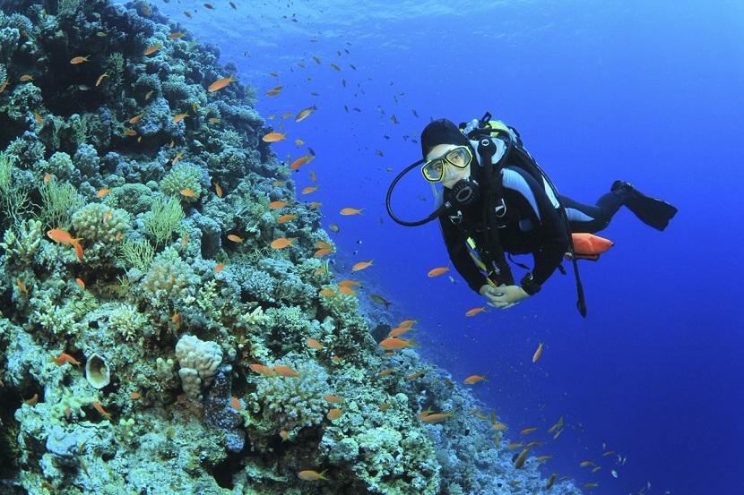 Oceanografía biológica