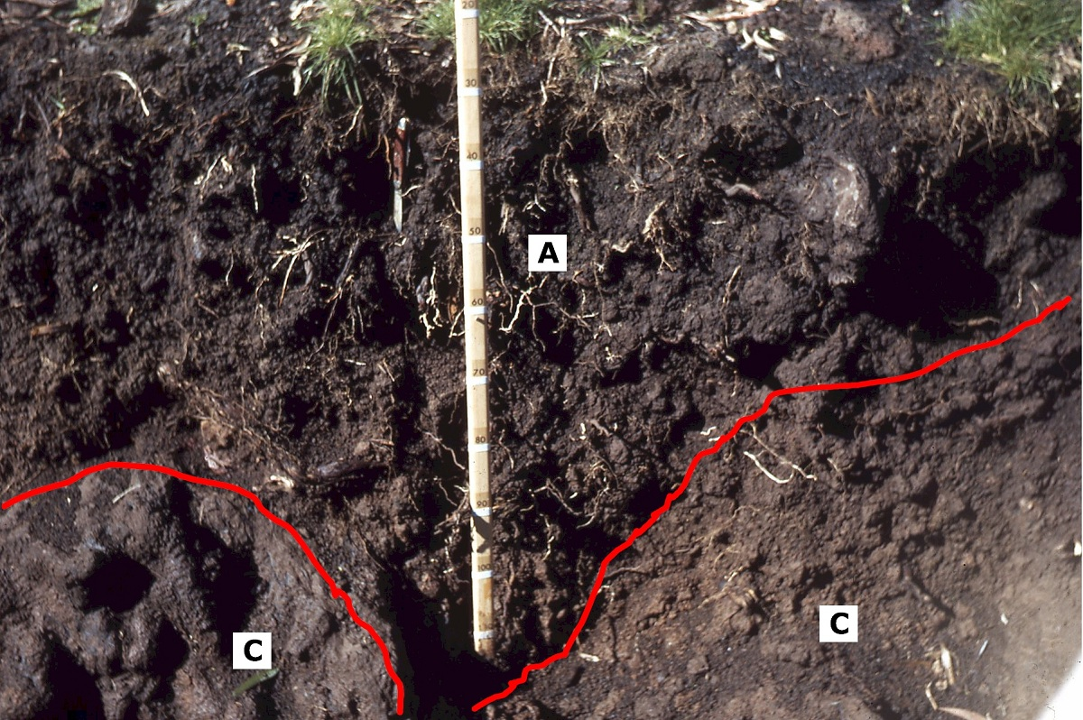 Andosol utilizado en cultivos