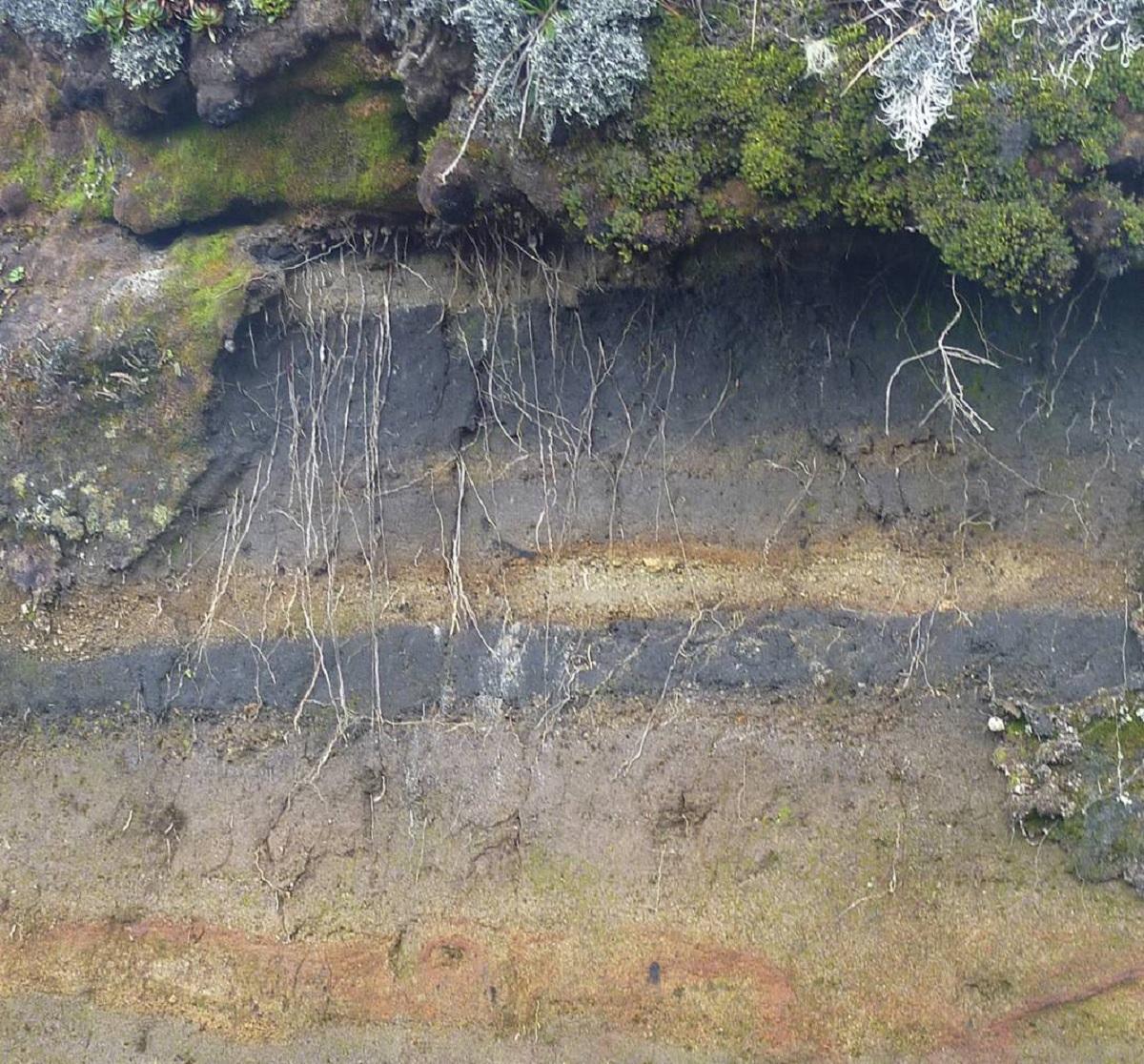 Horizontes del andosol