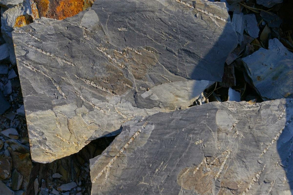 Geología del silúrico