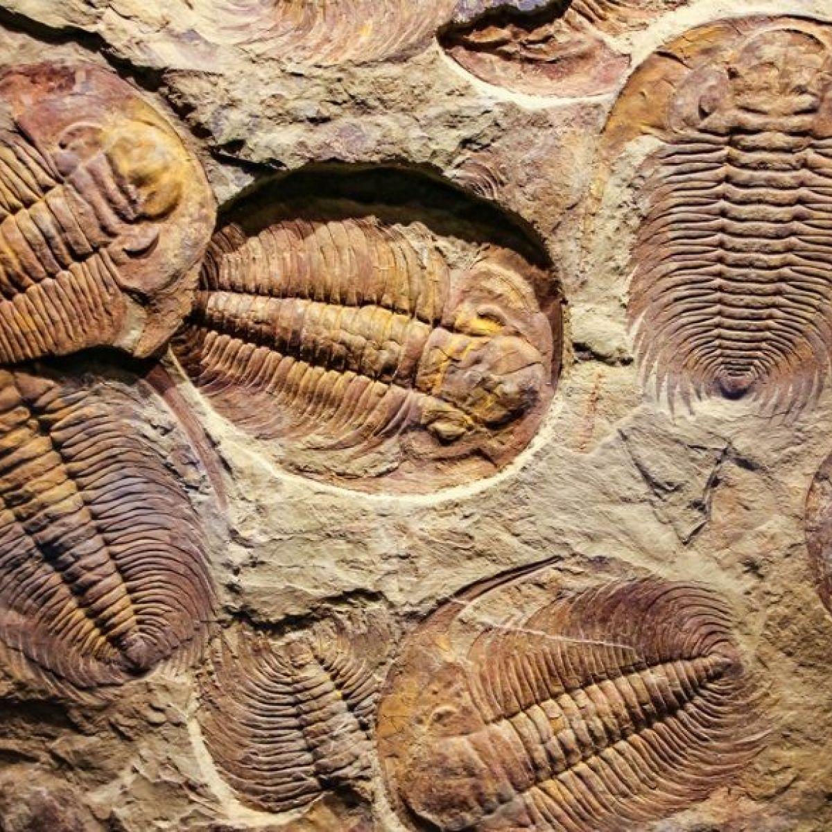 Registros fósiles
