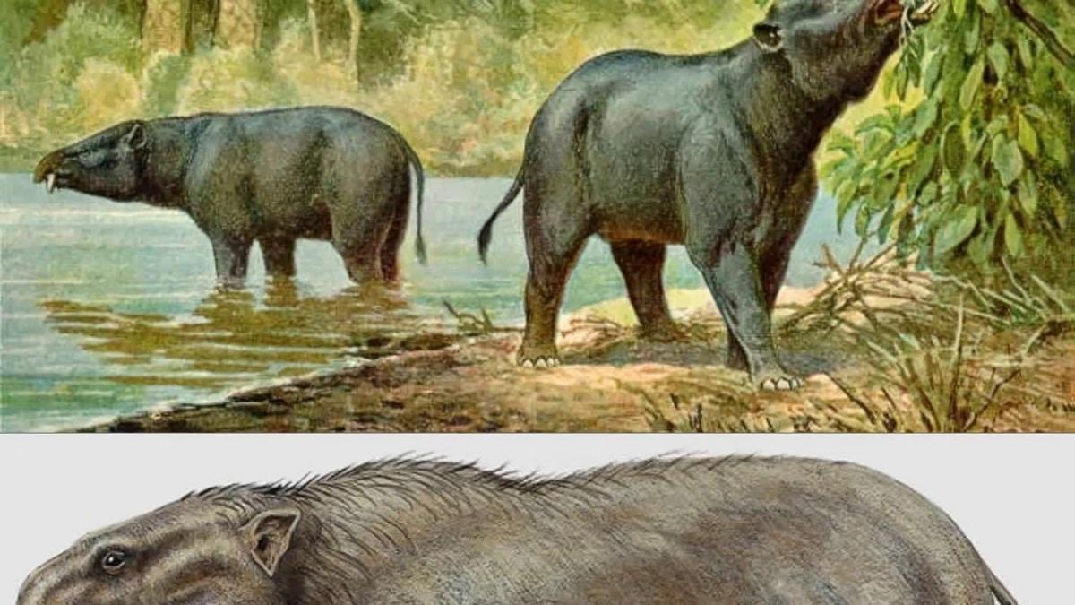 Epoca del Plioceno
