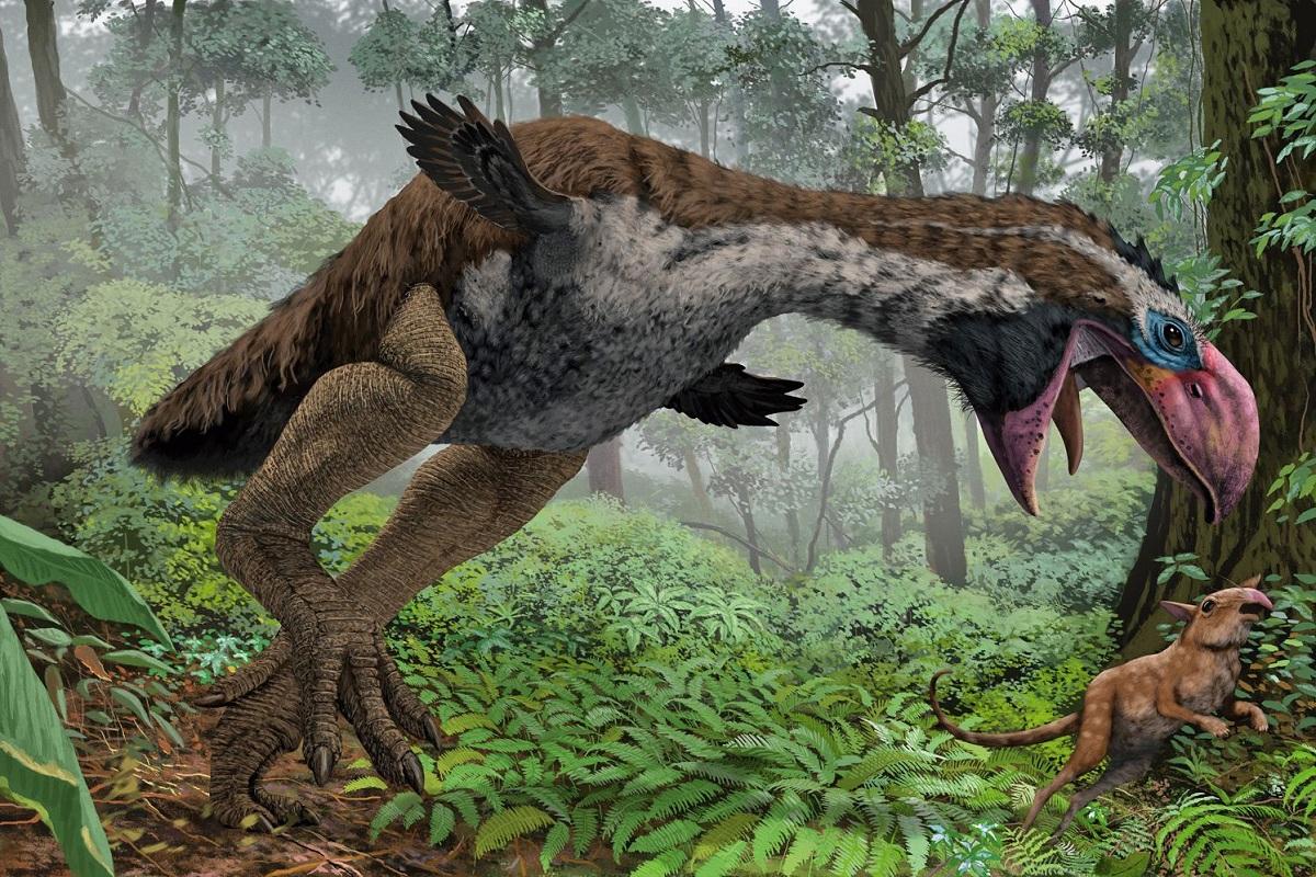 Aves de la fauna del Eoceno