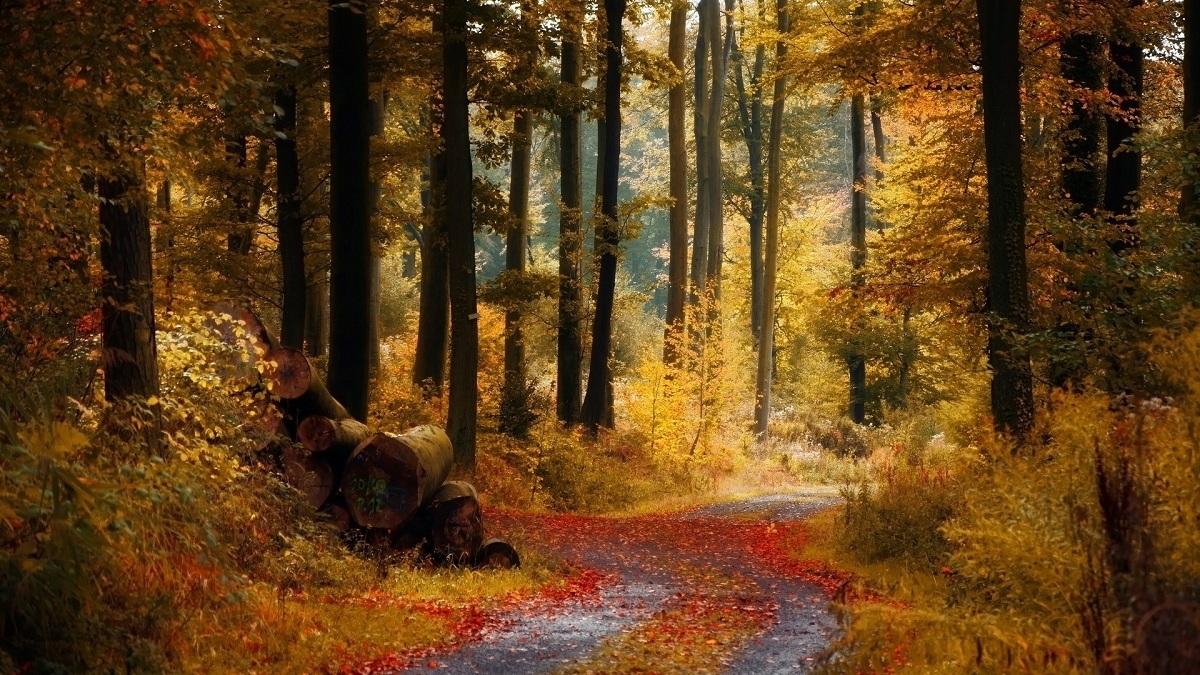 Bosque caducifolio oriental