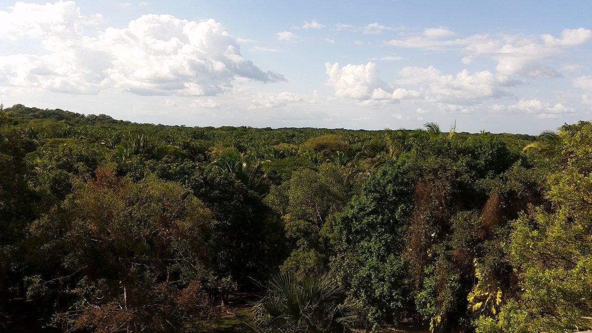 Bosque perennifolio características
