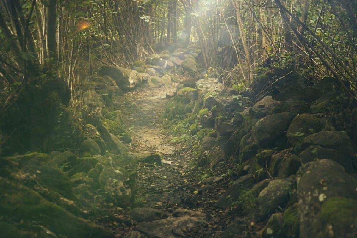 Curiosidades del bosque perennifolio