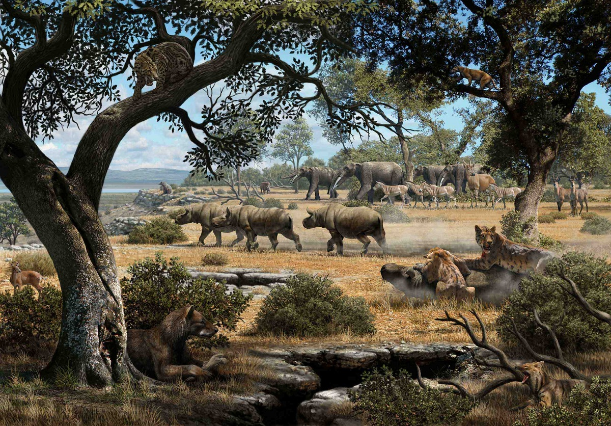 Fauna del Mioceno