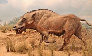Mamíferos de la fauna del Oligoceno