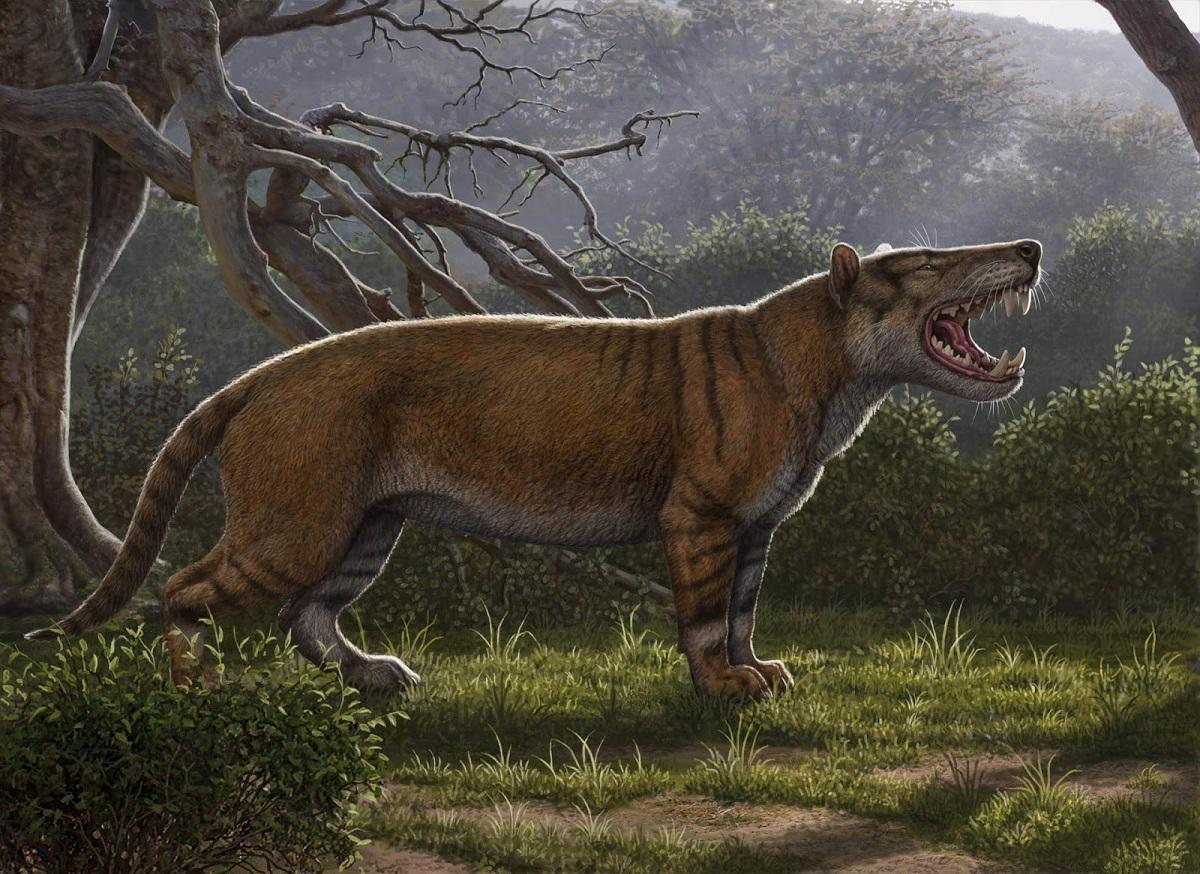 tigre de la fauna del mioceno