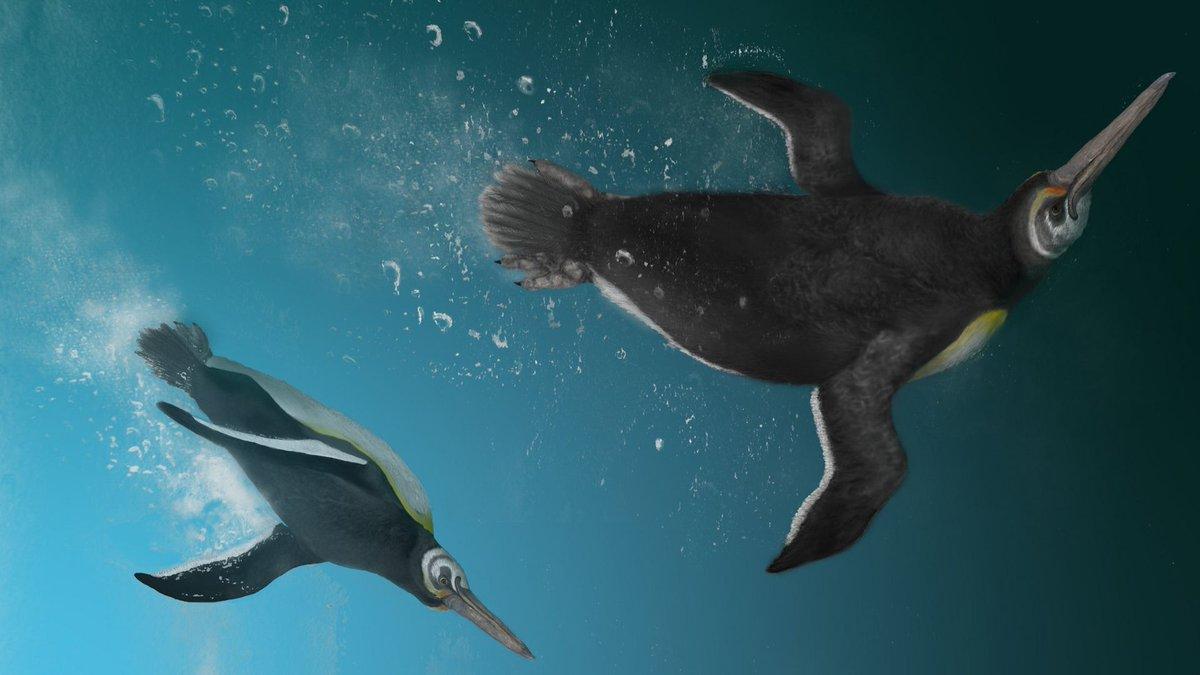 Fauna del Paleoceno acuática