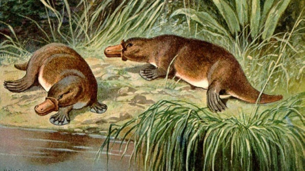 Fauna del Paleoceno