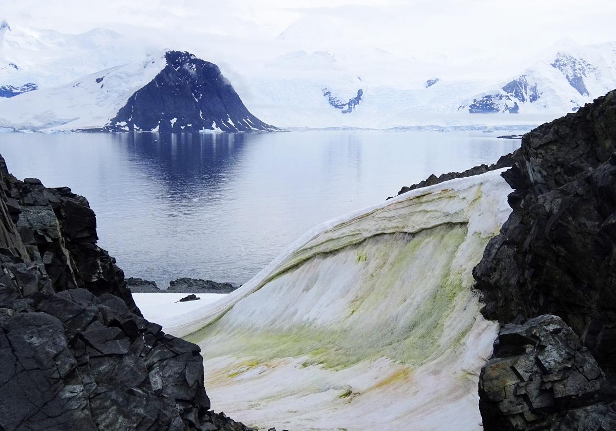 nieve verde en la Antartida