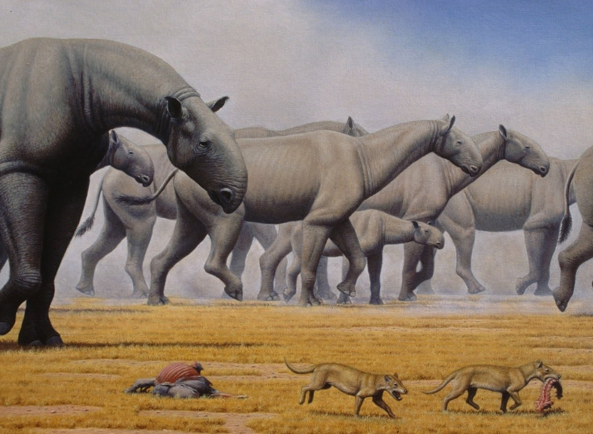 Periodo paleógeno y fauna