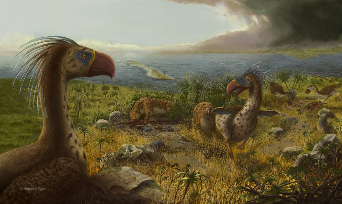 fauna del paleogeno tropical