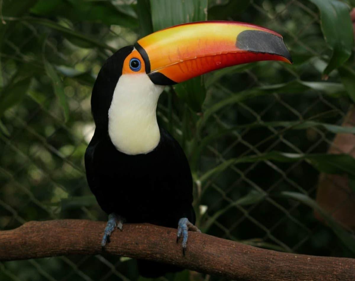 fauna del amazonas amenazada