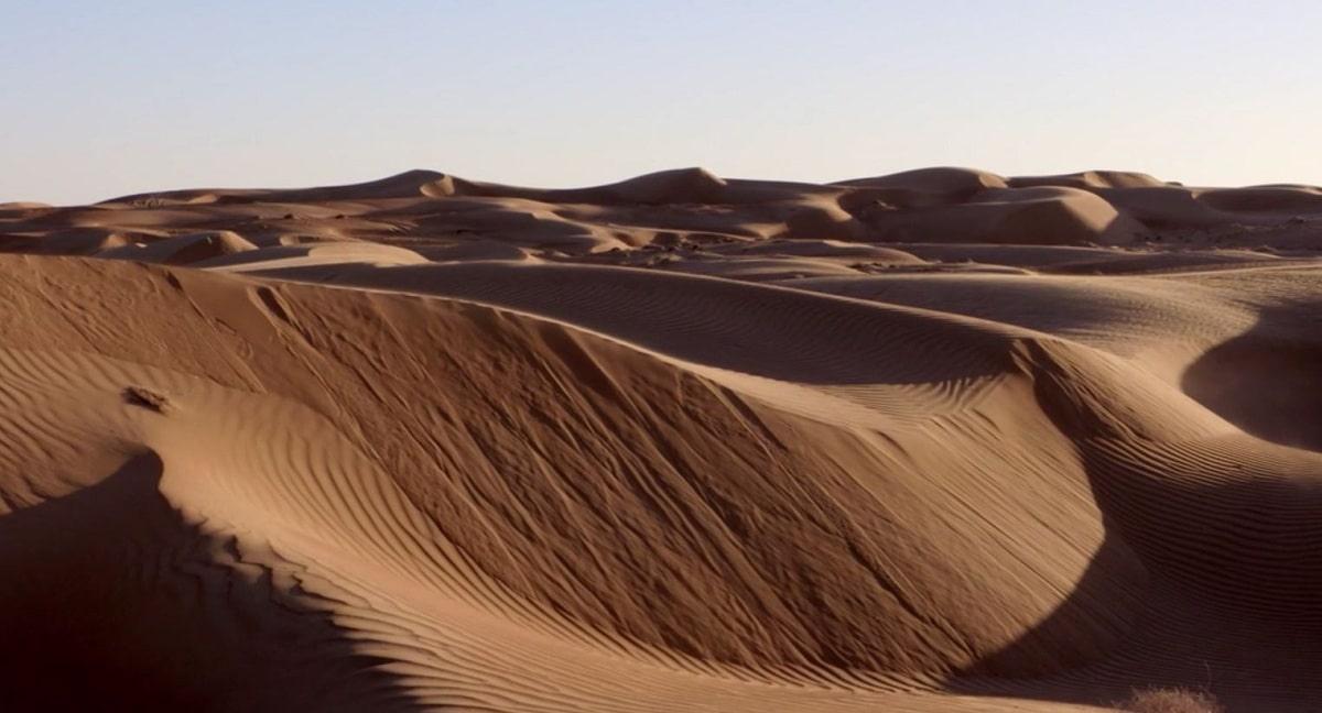 flora y fauna del desierto del sahara