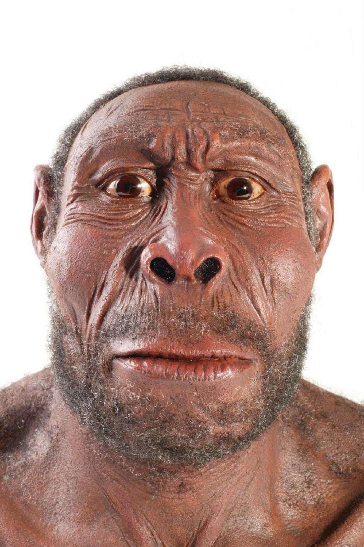 Homo habilis: características, origen y papel evolutivo