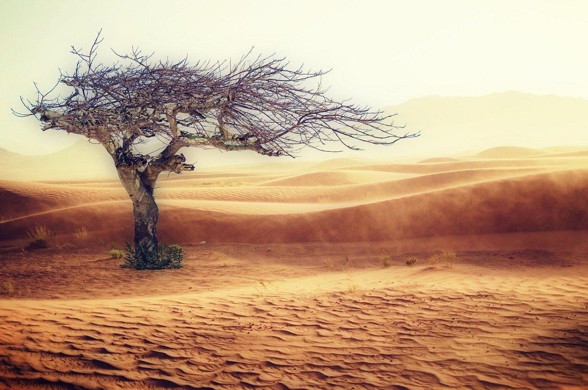 clima desertico flora