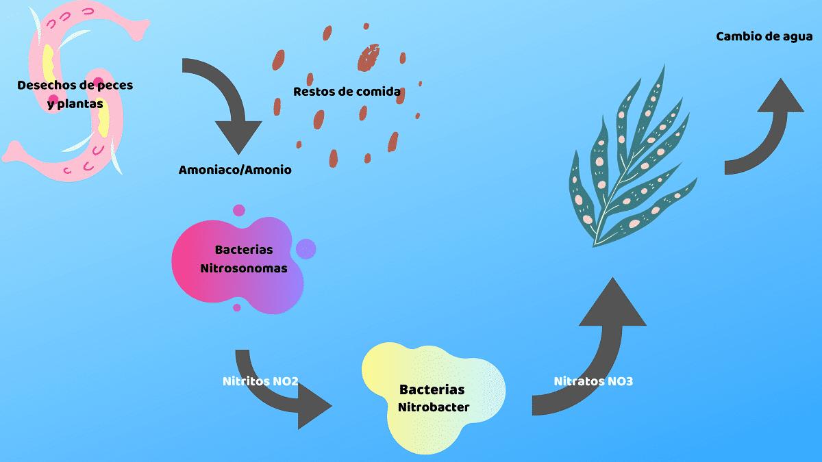 ciclo del nitrogeno en mar