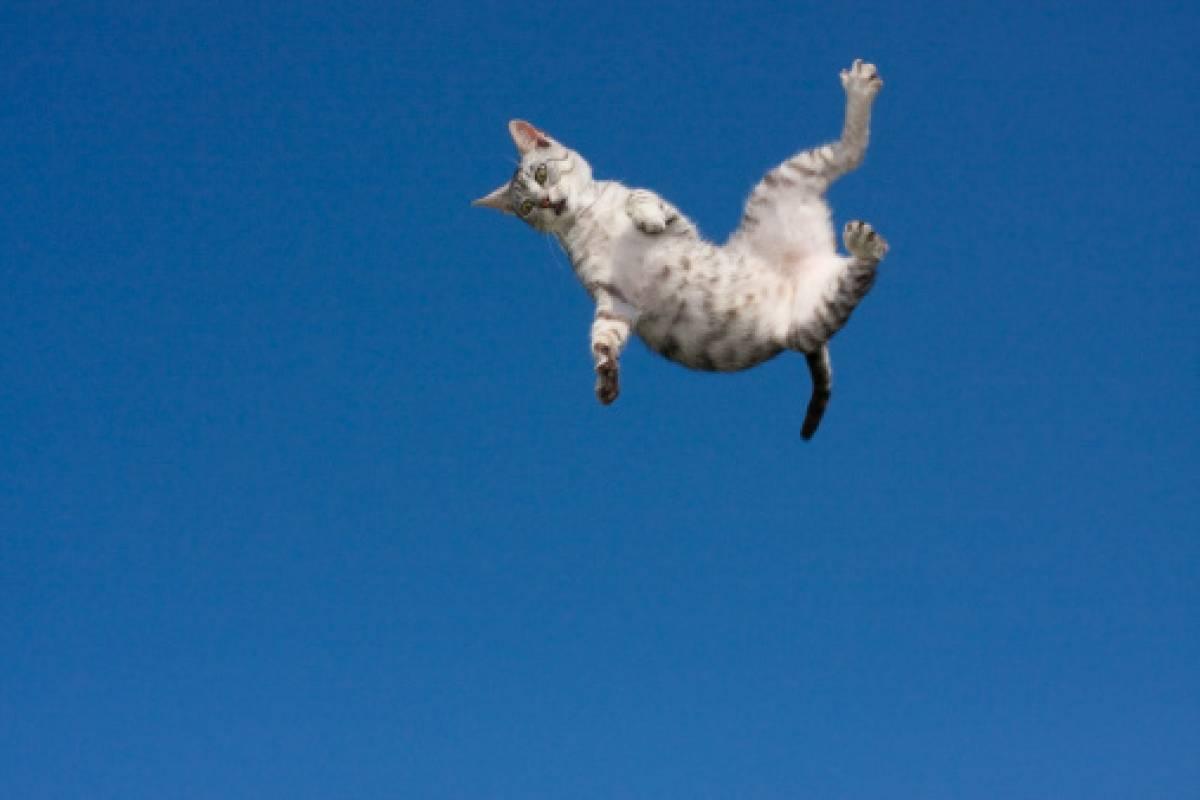 gatos caen de pie