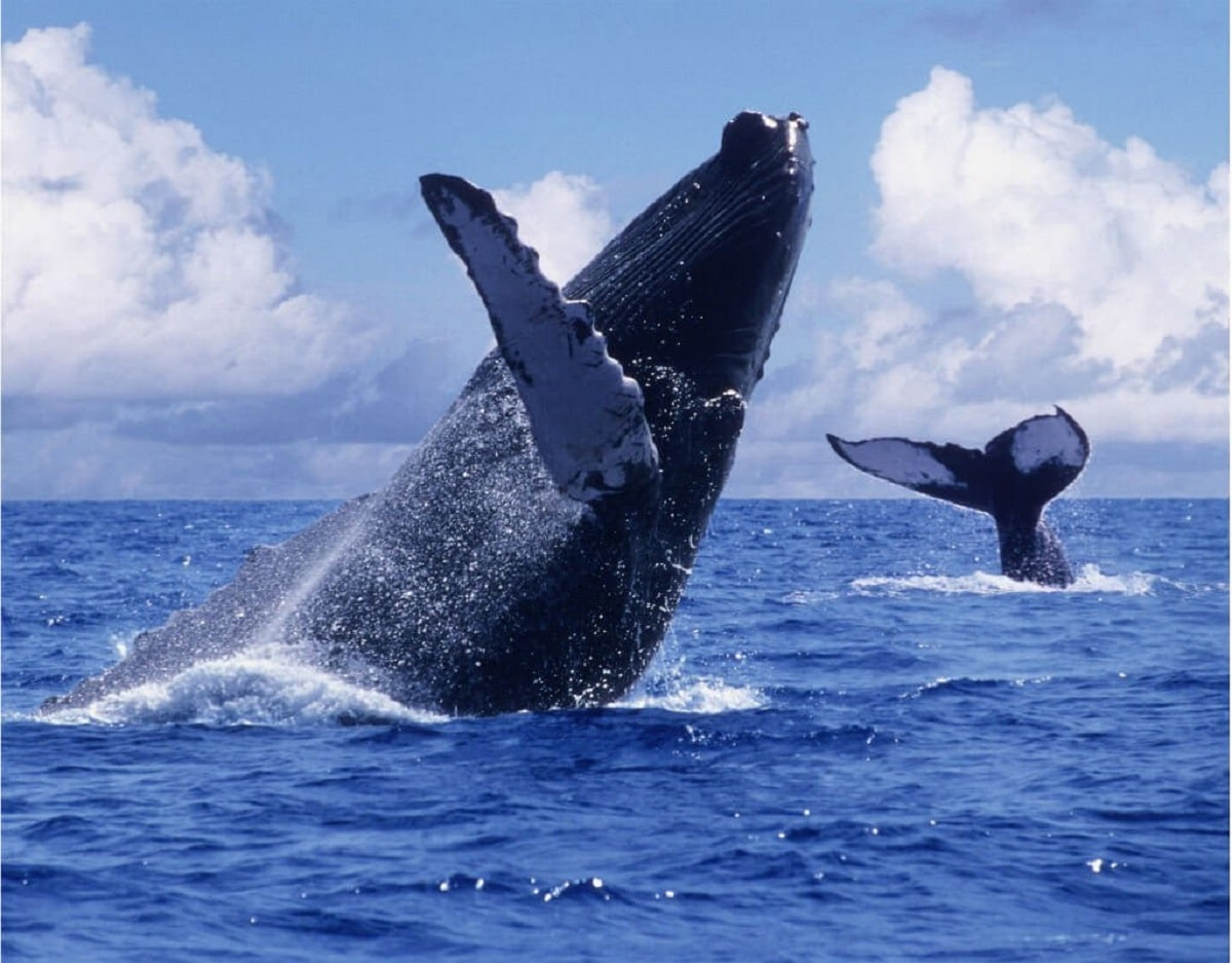 biodiversidad del mar de arabia