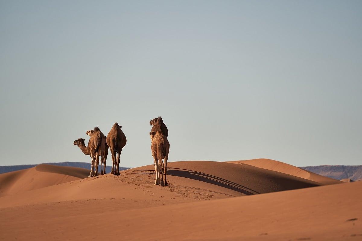 fauna de los desiertos del mundo