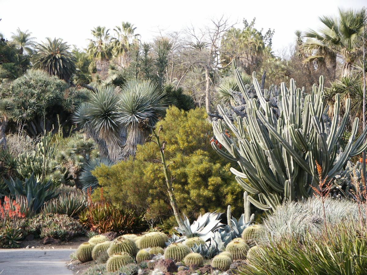 vegetacion seca