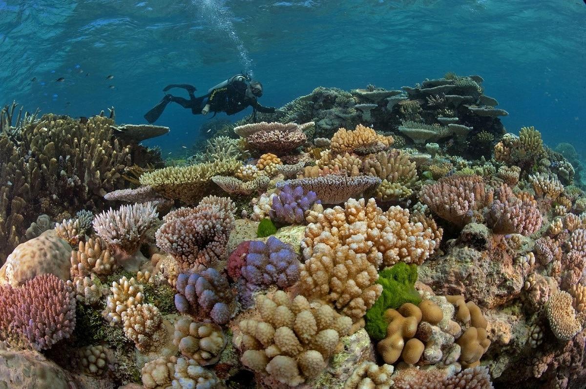 fauna del mar de coral