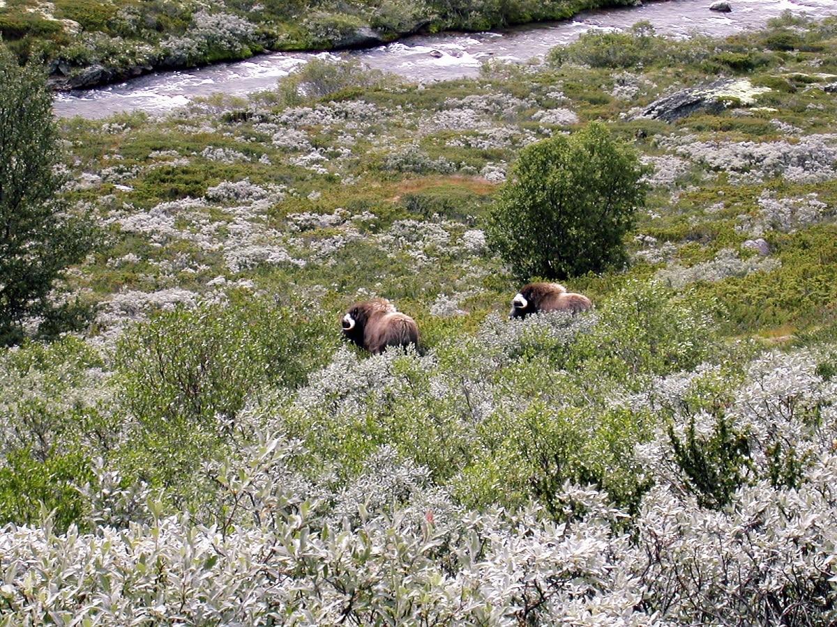 biodiversidad de los alpes escandinavos