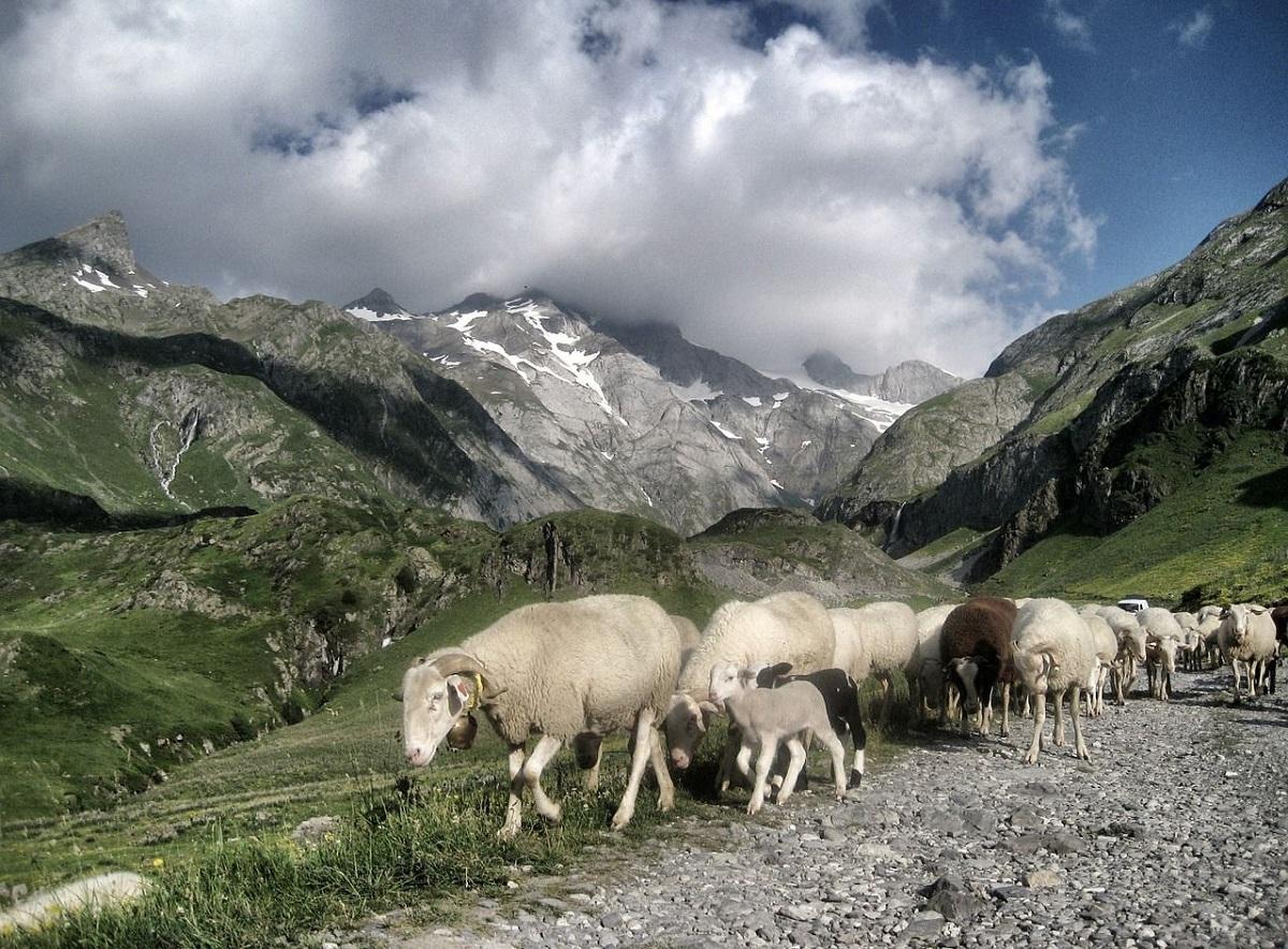 economia y fauna de los pirineos