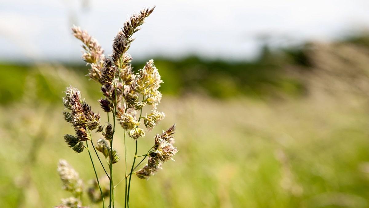 afeccion del polen