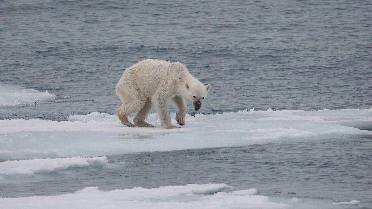 problemas del cambio climatico