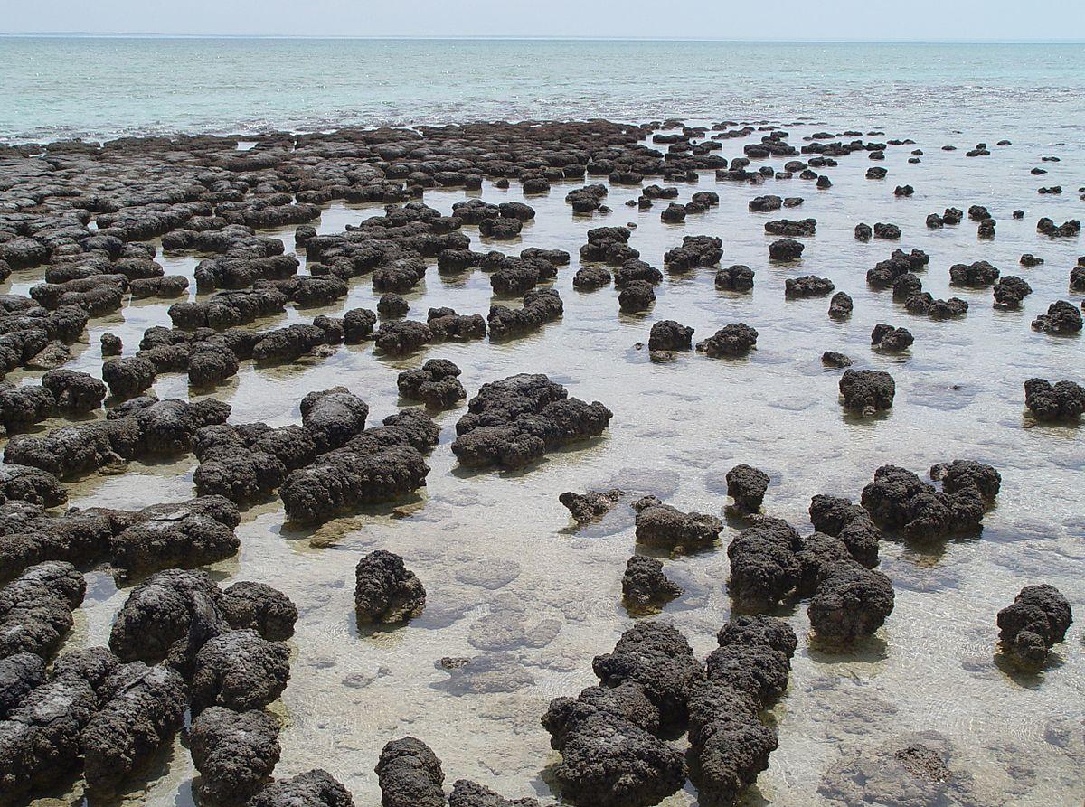estromatolitos